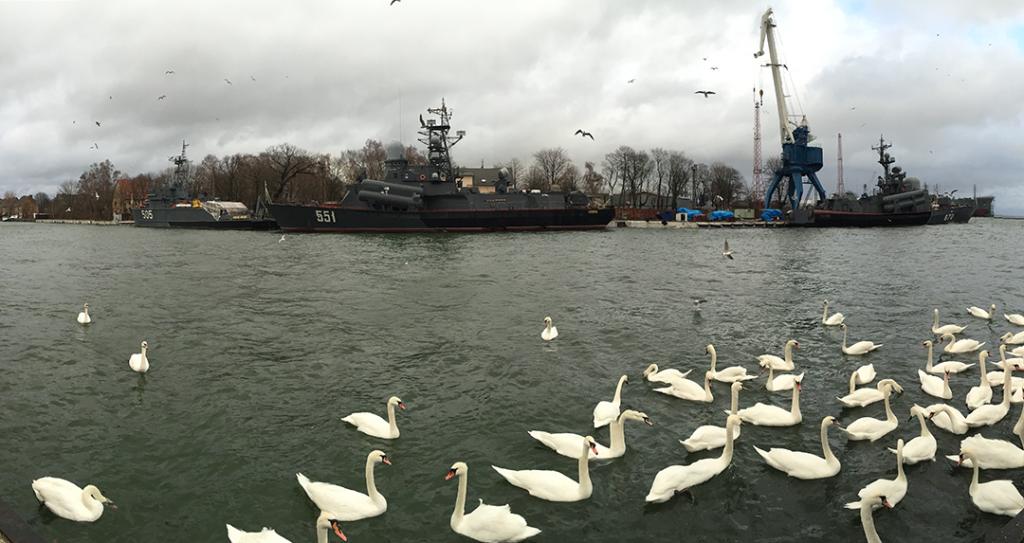 Лебеди в Балтийском море